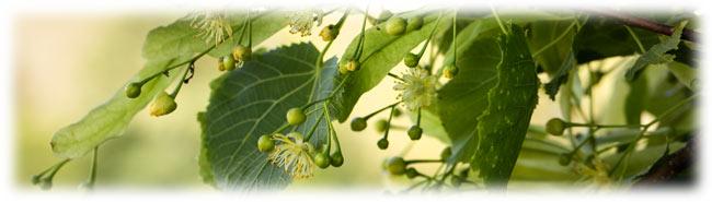 Heilkräuter aus dem Biosphärenreservat Entlebuch
