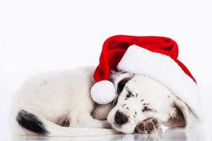 Weihnachtskarten mal anders