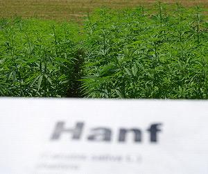 5 hochwertige Cannabis-Produkte, die die Lebensqualität steigern können