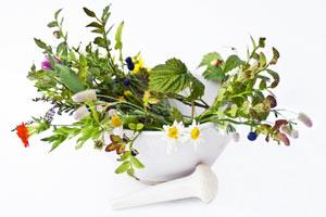 Heilpflanzen und ihre Wirkung