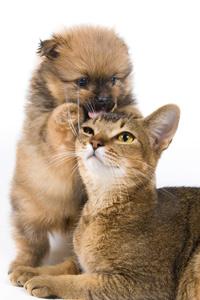 Hilfe fuer Katze und Hund
