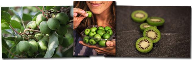 Nergi: Die Mini-Kiwi