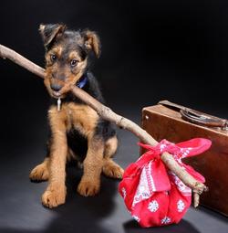 Wie Sie mit Ihrem Tier entspannt Ferien machen können
